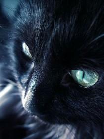 黑猫&奇遇