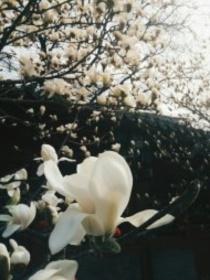 三生三世十里翠花