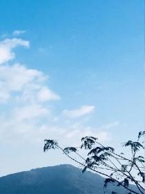 BTS:樹藤与海島