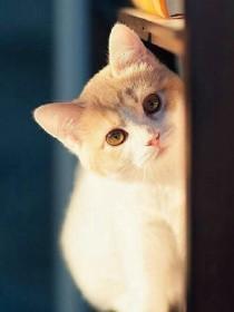 穿越异界变成猫