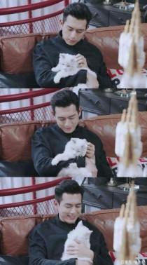 李现:穿越成为你的猫