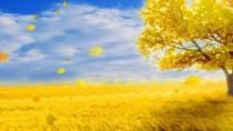小花仙之金色的田野
