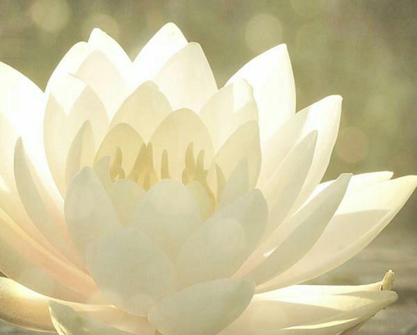 穿成一朵名为白莲的花-总裁养株白莲花-话本小说网图片